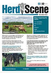 Herd-Scene-November 2016