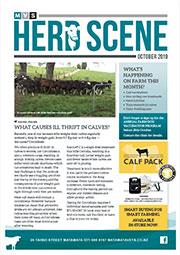 October 2019 Herd Scene