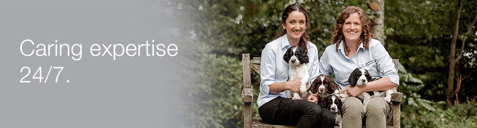 Matamata Veterinary Services Glenbred | Services