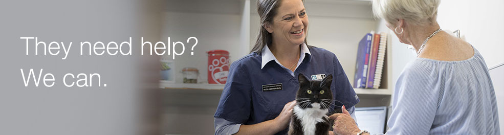 Matamata Veterinary Services Small Animals | Vets