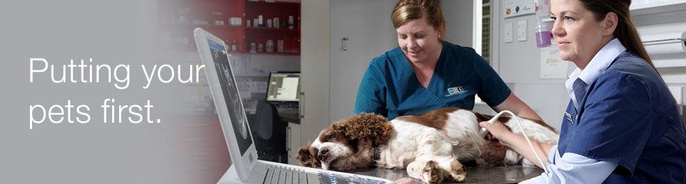 Matamata Veterinary Services Small Animals | Puppy Pre School