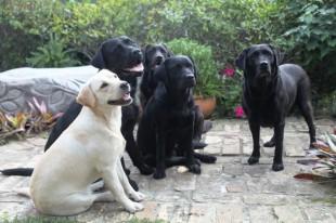 MVS Small Animals Pet Information - Matamata Veterinary Services