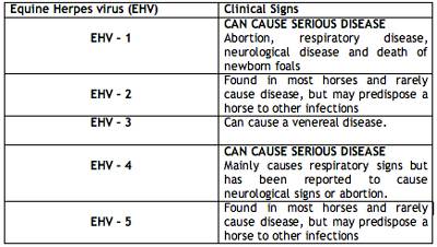 Different syndromes asian flu vaccine